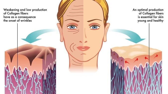 Collagen in Skin